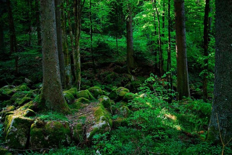 Интересные места нашей планеты Черный лес Шварцвальд