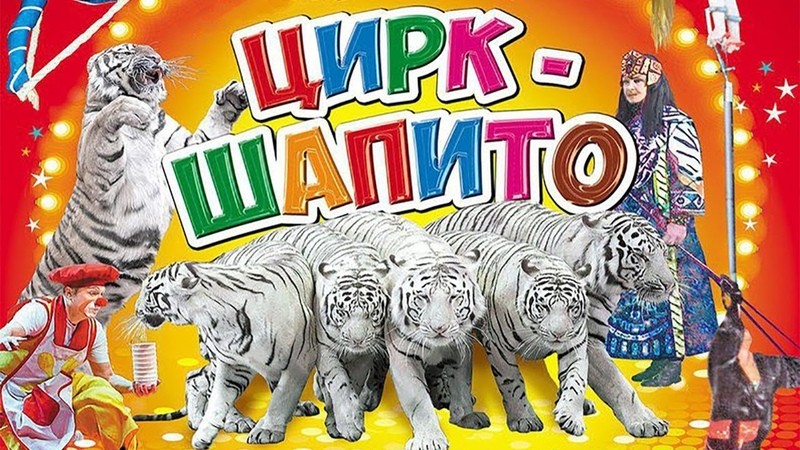 Московский Цирк Шапито Аттракцион Белые тигры