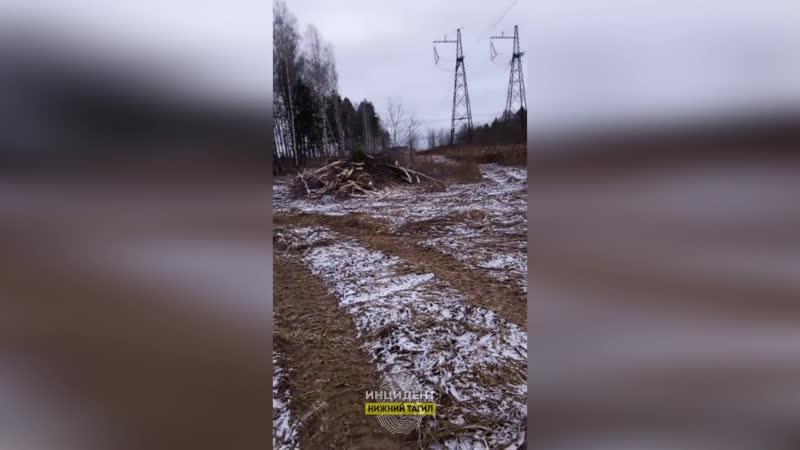 18 ПГТ Горноуральский Последствия чистки ЛЭП а