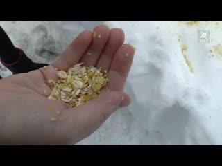 Покорми птиц зимой! Дети позаботились о пропитании пернатых друзей