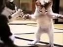 Танцующие котята -это невероятно, уфф смех от души! Самое прикольное видео про кошек!