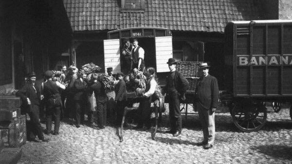 В 1905 году Норвегия официально получила статус независимого государства Но не только этим этот год примечателен в истории страны.Первые бананы приехали в Норвегию. 1905