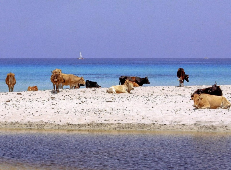 5 самых странных пляжей. Часть 1, изображение №5