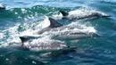Энергия Океана - Медитативная , расслабляющая музыка -Песни Китов и Щебетание Дельфинов