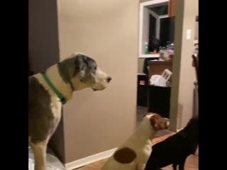 очередь из собак
