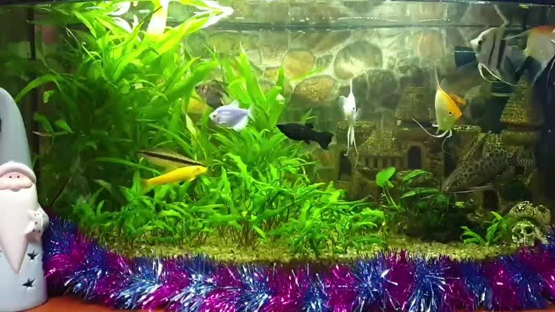 аквариум версия 01 21