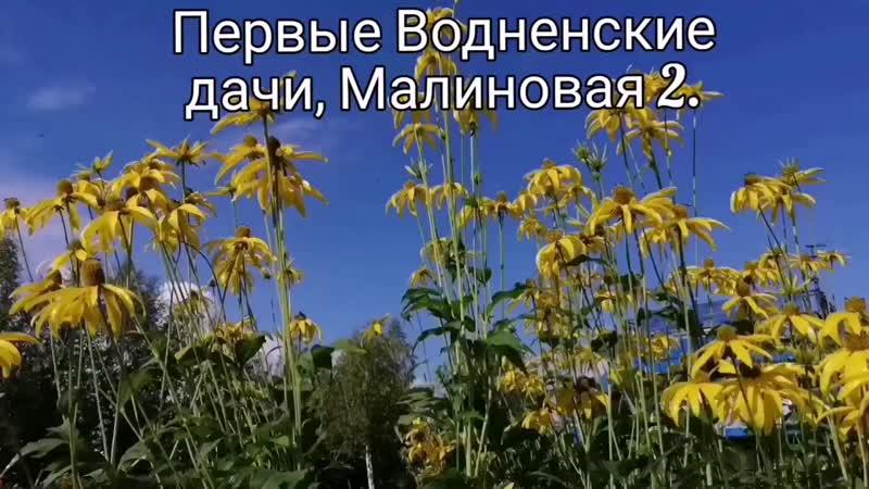 Жду цветения новых сортов фуксий 🤔🙏😜 ухтацветы купитьцветывухте люблюлето лето2020 ukhta komi
