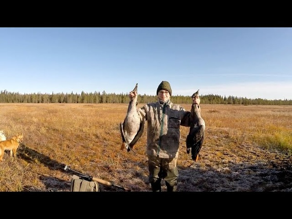 Осенняя охота на гуся 2020 Охота на гуся на Северных болотах Охота на гуся в Архангельской области