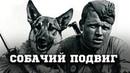 «Собачий бой» как 150 псов «РАЗОРВАЛИ» два немецких батальона