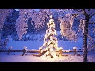 Ёлка пахнет Новым Годом - New Year tree smells