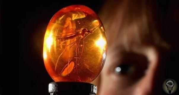 Исследователи впервые извлекли ДНК насекомых, пойманных в смолу