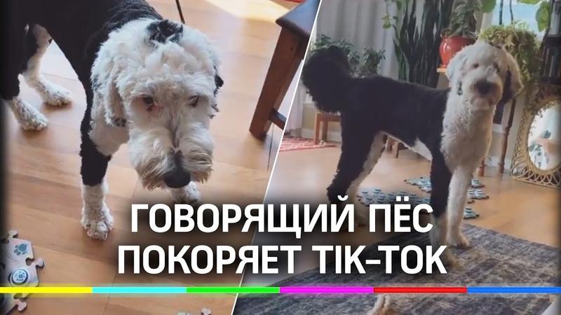 Говорящая собака из TikTok заинтересовала учёных