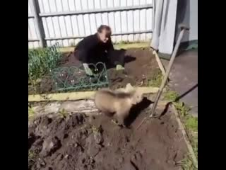 Обычный день в России..)))