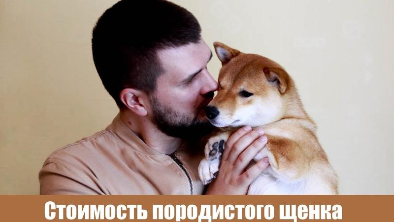Сколько стоит породистый щенок Сколько обходится собака в месяц