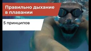 Правильно дыхание при плавании   5 принципов