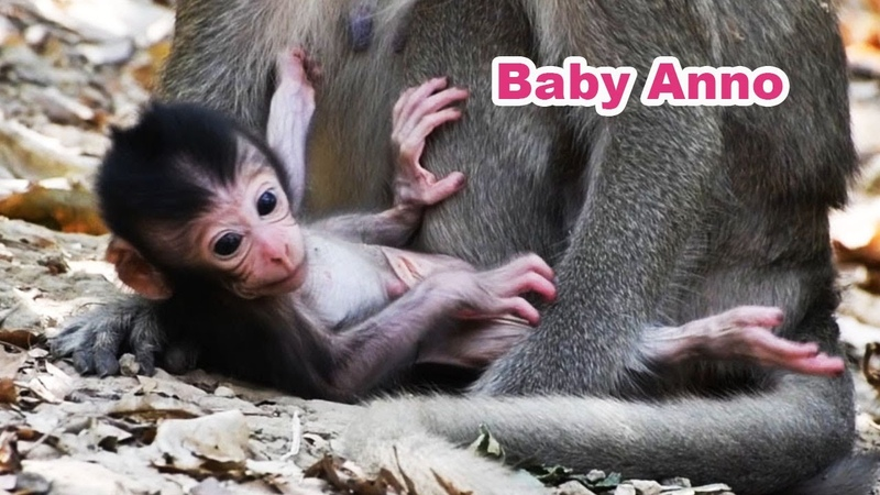 Congrats Name Of Newborn Is Called Anno and Mom Annie Adorable Wildlife 2020