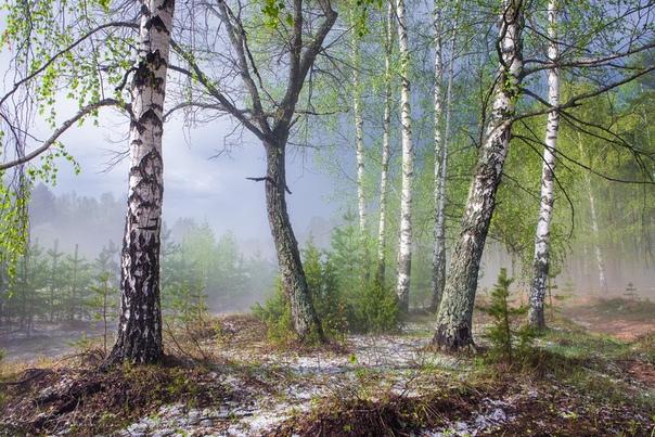 Весенний лес после грозы с градом