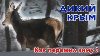 Как перезимовали дикие животные в Крыму
