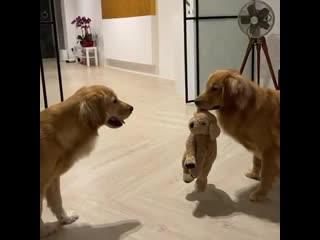 показывает свою игрушку
