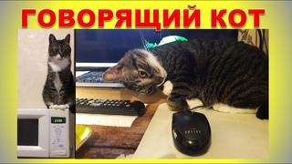 Говорящий кот человеческим голосом передразнивает своего хозяина 16+