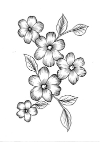 drawings of flowers - 736×1040
