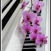 Синтезатор  +фортепиано. ALIVE MUSIC.