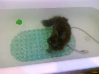Сецуна купался