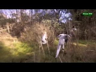 СОЮЗНИКИ/ALIADOS 2 серия (озвучка) 2-ой сезон