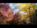 日本紅葉の名所100選 宮島・紅葉谷公園 広島県 Autumn leaves 단풍 les feuilles d'automne hojas de otoñ