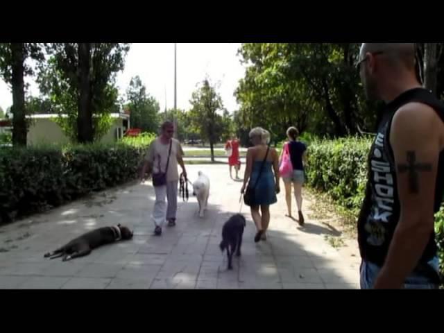 Агрессивный Шнауцер Перец Агрессия на собак