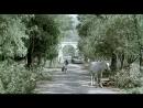 «Дом дураков» |2002| Режиссер: Андрей Кончаловский | драма, мелодрама, военный