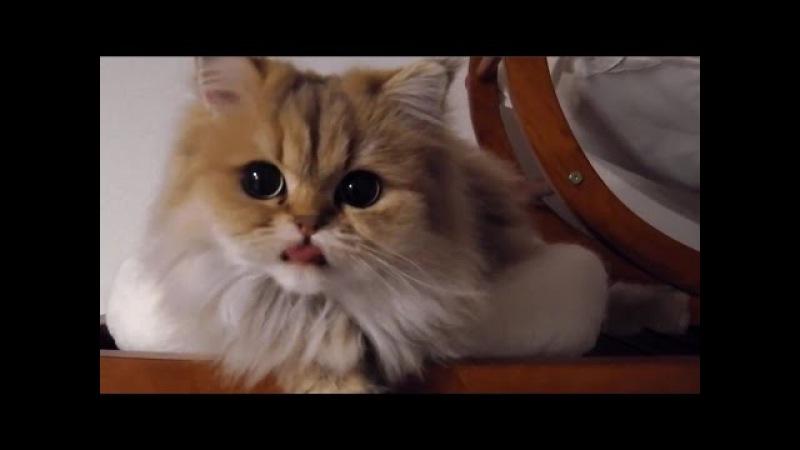 Топ 5 смешные и милые кошки TOP 5 Fynny cats
