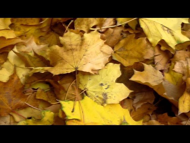 Jesień idzie przez park Krzysztof Klenczon Czerwone Gitary