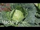 Шедевры из капусты и их рецепты - Все буде смачно - Часть 2 - Выпуск 86 - 13.0.2014