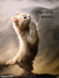 Картинки, картинки кошек с надписью прости меня