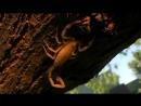 Animal Planet Самые большие и страшные жуки в мире 2009