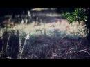 איה כורם - צלצולי פעמונים | Aya Korem - Tziltzuley Paamonim