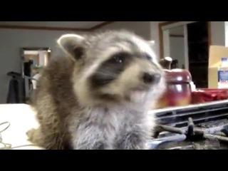 Очень милое видео. Омномном вкусняшки. (Животные №1)