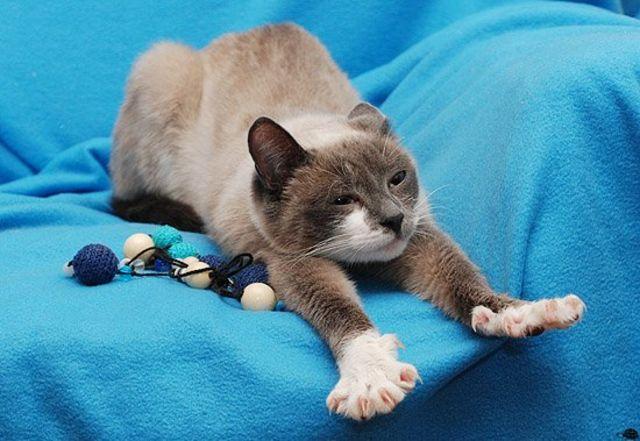 картинки послушный котик простой семьи