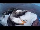 Охота на гуся в Якутии Yakutia