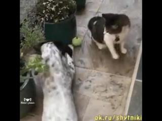 Жадный кот... Не себе не другим....