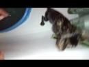 Тося- смесь кошки, мышки и енота)