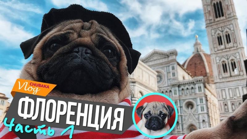 Флоренция - Глебкин сюрприз - Чубака в апартаментах 14 века - Chubaka Vlog!