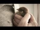 Осенняя птица - стихи - Валентин Голубев, муз. и исп. - Людмила Гарни