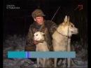 Охота на кабана в Вологодской области