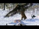 Удивительные случаи спасения из лап хищников ...
