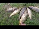 Ловля сазана Рыбалка на жмых