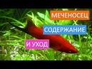 Виды аквариумных рыб. Удивительная рыбка меченосец.