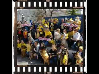 """""""Желтый флешмоб"""" как это было сегодня весело с хвостиками, все за одну песню  /в формате инСТОГРАМм/"""