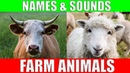 Farm Animals Names and Sounds for Kids to Learn Learning Farm Animal Names and Sounds for Children